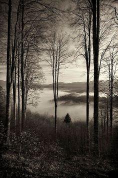 ✯ Nel bosco incantato - Alpago, Italy ✯
