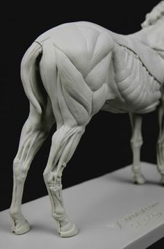 Anatomy: Equine figure in 2019 Horse Anatomy, Animal Anatomy, Horse Skull, Horse Art, Horse Head, Anatomy Drawing, Anatomy Art, Drawing Art, Horse Sculpture
