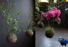 Se quiser um cantinho verde diferente em sua casa faça como o holandês Fedor van der Valk: esqueça definitivamente os vasos. O paisagista cria jardins suspensos, em que as plantas ficam penduradas por linhas. Funciona assim: dentro de uma esfera, formada por terra e musgo, a raiz da planta é envolvida por uma espécie de rede feita com fios resistentes. Depois, o arranjo é fixado no teto e parece flutuar no ar.