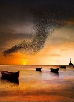 Boats and flocks of birds at sunset in Toamasina east coast of Madagascar on the Indian Ocean.