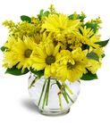 beautiful yellow daisy arrangement