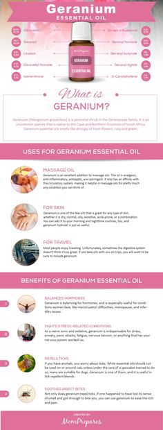 Geranium essential oil offers users a wide array of uses and benefits from skincare to stress treatment and more This guide covers them all via momprepares Essential Oils For Massage, Natural Essential Oils, Essential Oil Blends, Calendula Benefits, Oil Benefits, Young Living Oils, Young Living Essential Oils, Natural Living, Essential Oils
