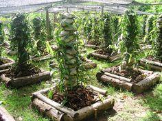 Mico Verde Polynesia Cruising Blog