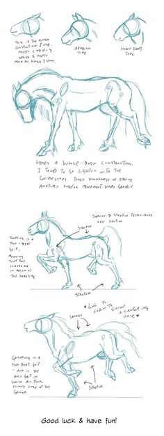 Some more sketches for class. Done in Photoshop with a Wacom Intuos 5 touch. Some more sketches for class. Done in Photoshop with a Wacom Intuos 5 touch. Creature Drawings, Horse Drawings, Art Drawings Sketches, Animal Drawings, Cool Drawings, Arte Equina, Horse Sketch, Unicorn Sketch, Horse Anatomy