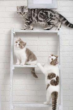 Gato em apartamento: saiba quais cuidados ter com seu pet