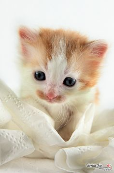 Playing in Toilet Paper by Jerrica Joy, via Flickr