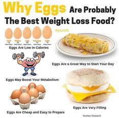 By show up hands who here are a big fan of EGG! - Eggs Are Low in Calories. One large egg contains about 78 calories. A meal consisting of 3 boiled eggs and vegetables contains only about 300 calories. - Eggs Are Very Filling. Studies have repeatedly sho Gym Nutrition, Nutrition Month, Nutrition Guide, Health Fitness, Nutrition Chart, Nutrition Quotes, Holistic Nutrition, Nutrition Education, Weight Loss Meals