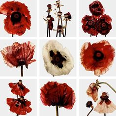Irving Penn: FlowersIndulge in the luxury of this beautiful photography book - complements any coffee table or bookshelf, and makes a lovely gift …Irving Penn: Flowers