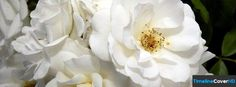 White Flowers Facebook Covers Facebook Cover