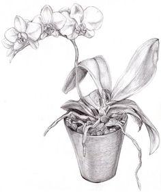 Resultado de imagem para flower pot pencil drawing