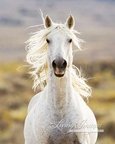 Freedom's Call  Fine Art Wild Horse Photograph by Carol Walker www.LivingImagesCJW.com