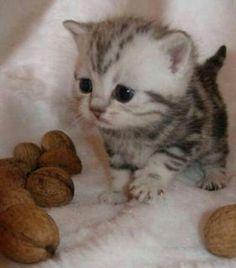 Kitten!!!>.< #Fantastic