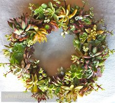 Gardening Gone Wild, How to make a Succulent Wreath