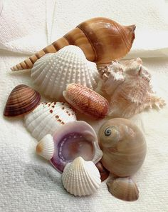 Seashells | Flickr - Photo By Dorothy Tigerbright