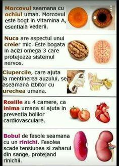 Nutriție și varicoză
