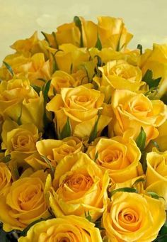 Ana Rosa- Yellow Roses,  New Beginning, friendship, joy, Delight