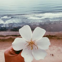 Shared by Find images and videos about summer, white and flowers on We Heart It - the app to get lost in what you love. Ocean Wave, Summer Of Love, Strand, Summer Vibes, Scenery, Artsy, Tropical, Nature, Photos
