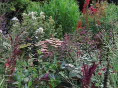 Wildest Dreams Garden Design