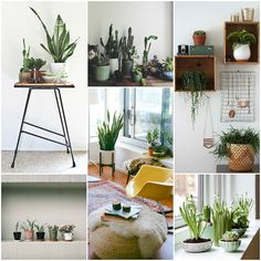Plant Inspiration After the inception of the Plant Club, I've been searching out new plants, plant ideas, plant planters, plant soil, ...