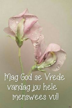 Mag God se Vrede vandag jou hele menswees vervul... #Afrikaans #BesteWense (Sarita) Morning Greetings Quotes, Good Morning Messages, Good Morning Wishes, Morning Images, Good Morning Quotes, Night Quotes, Morning Inspirational Quotes, Inspirational Thoughts, Evening Greetings