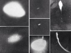 Nel 1977, l'isola brasiliana di Colares e il delta del Rio delle Amazzoni sono stati visitati da oggetti volanti non identificati, con caratteristiche scon