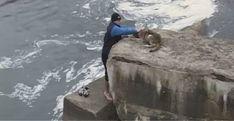 Il cane salvato dall'annegamento che torna indietro a salutare il suo benefattore/VIDEO