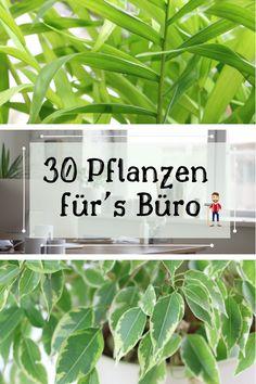 Ficus, Plants, Climbing Vines, Kentia Palm, Apartment Plants, Plant, Figs, Fig, Planets