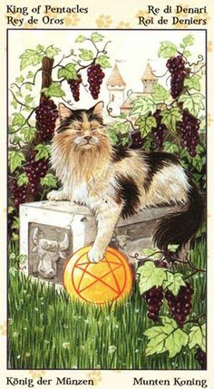 Le roi d'écus - Tarot de chats païens