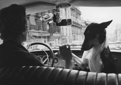 Alfred Eisenstaedt - Woman taxi driver sharing front seat with pet dog, Paris, Edward Weston, Richard Avedon, Ansel Adams, Pet Dogs, Dogs And Puppies, Vintage Dog, Vintage Paris, Vintage Stuff, Taxi Driver