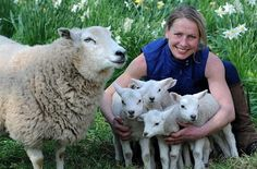 Meet Dolly the supermum sheep - who astounded experts by giving birth to six healthy lambs.  The sextuplets were born to two-year-old Dolly, a pedigree Lleyn ewe on April 3 at Crookham Westfield farm, on the Pallinsburn Estate in Cornhill on Tweed, Northumberland.  Estate owner George Farr's sons Ollie, 11, and Jamie, 10, have named the three-week-olds Valerie, Harriet, Scrappy, Rosie, Chunky, and Slim.