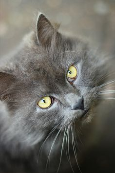 cat         Posted by verarolle  on 2011-10-09 16:44:22      Tagged:  , cat  - http://newsyork.gq/cat-155/