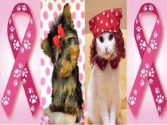 Outubro Rosa Pet: câncer de mama em cadelas e gatas   Entre Coisas
