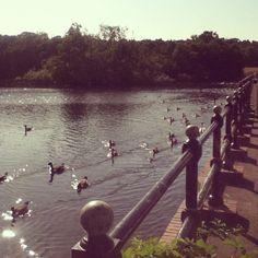 Feeding the ducks at Sutton Park, Sutton Coldfield Sutton Park, Sutton Coldfield, Uk Trip, Birmingham England, Urban Park, Forest Park, West Midlands, Nature Reserve, Capital City