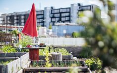 Learn how to get started on your own urban garden