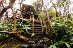 Treehouse at Kilauea Volcano in Volcano, Hawaii - Tiny Houses for rent on Airbnb Hawaii Volcanoes National Park, Volcano National Park, National Parks, Dream Vacations, Vacation Spots, Vacation Ideas, Hawaii Vacation, Hawaii Honeymoon, Aloha Hawaii