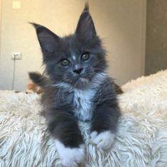 http://www.cleavercat.com/product-category/cats-treats/