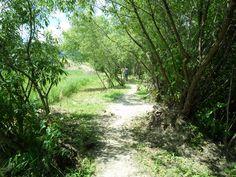SAM_0323 Country Roads, Nature, Wordpress, Naturaleza, Nature Illustration, Off Grid, Natural