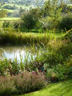 Trench Hill , Sheepscombe in  Gloucestershire Heaven is a garden along a pond. This is open for a garden visit.