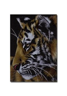 TIGER 32 portrait big cat feline pencil painting Sandrine Curtiss Art Limited Edition Print ACEO by Sandrinesgallery