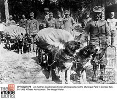 An Austrian dog transport corps photographed in the Municipal Park in Gorizia, Italy. 1/1/1916 ©Press Association / The Image Works