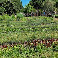 Photo 2 of Edible Schoolyard Berkeley Vineyard, Education, Outdoor, Outdoors, Vine Yard, Vineyard Vines, Outdoor Games, Onderwijs, The Great Outdoors
