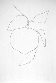 ellsworth kelly, plant drawings