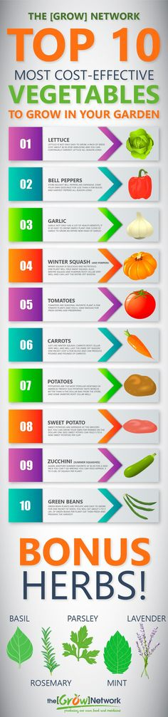 The TOP 10 most cost-effective veggies to grow in your garden! These veggies are easy-to-grow in your vegetable garden big or small. Depending on your growing season, you may even be able to plant two or three times. | Gardening, Urban gardening, Sustainable living, Permaculture, Homesteading, Compost, Beekeeping, Natural health, Survival, Off-grid, Prepping