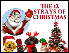 """What better way to celebrate the holidays then by choosing the """"Adoption Option""""!   Join in the festivities with the 12 Strays of Christmas; your chance to adopt a new cat or dog for only 12 dollars.  This special offer runs Friday, December 7th through Tuesday, December 18th. (Some restrictions apply)  Learn more @ www.HoustonSPCA.org"""