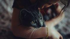 Как кошки лечат людей?  Мурлыканье успокаивает нервы.  Характерный звук, который издают кошки во время ласковых игр с хозяином — это ультразвуковые волны, которые положительно воздействуют на нервную систему и восстанавливают ее.  Высокая температура тела оказывает согревающий эффект. Кошки имеют температуру тела от 38 до 39 градусов, поэтому могут запросто согреть человека или «прогреть» ему больные суставы, например.  Помощь в стрессовой ситуации. Коты могут подарить нежность своему…