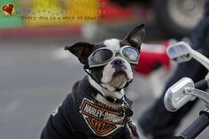 Photo by Heart Dog Studios. heartdogstudios.com