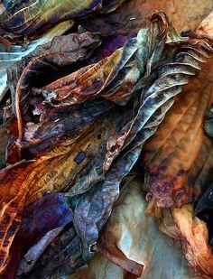 Vivd | Mixed | Color | Colour | цвет | カラー | Couleur | Colore | Remnants by Jessica Jenney
