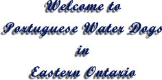 banner Ontario, Portuguese Water Dog, Banner, Portuguese, Dogs, Water, Banner Stands, Banners