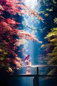 Okuni Shrine/shizuoka The post The Fantastic Scenery Enchanted By Autumn Colors & Ray Of Light autumn scenery appeared first on Trendy. Japanese Nature, Japanese Landscape, Fantasy Landscape, Landscape Art, Landscape Photography, Nature Photography, Japanese Modern, Photography Backgrounds, Photography Basics