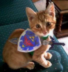 Legend of Zelda Kitten Link.